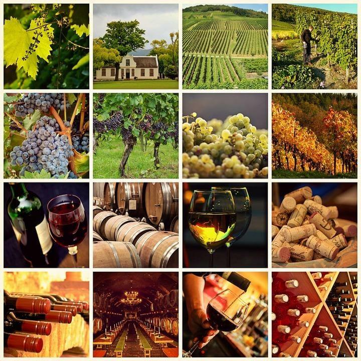 Сорта винограда, Виура, Гарнача, Темпранильо