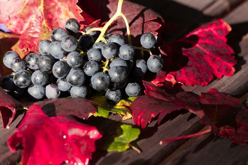 сорта винограда как темпранильо, гарнача, каберне совиньон и мерло