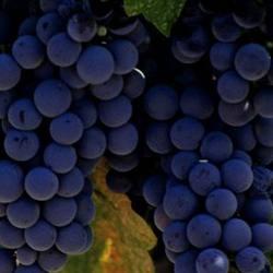 Экскурсия Монтсеррат и винодельня, фотография 1