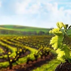 Экскурсия Монтсеррат и винодельня, фотография 2